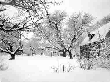 Krusenstiernska trädgård